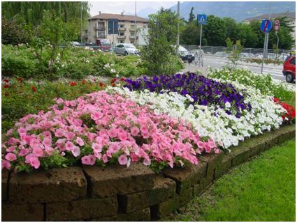 Aiuole con fiori misti per tutto l 39 anno giardinaggio fai for Bordi per aiuole fai da te