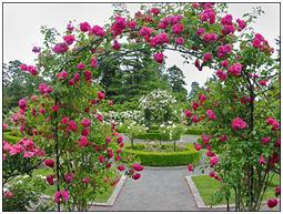 Curare i fiori del nostro giardino giardinaggio fai da te for Giardini meravigliosi