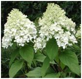 Fiori e piante estivi quattro fiori per ogni stagione for Arbusto dai fiori rosa e bianchi